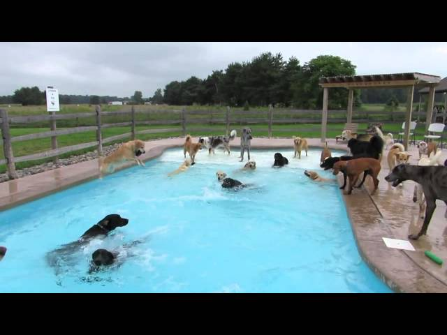 Dog pool party cute tube videos for Cute pool pictures