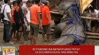 UB: Butanding na natagpuang patay sa dalampasigan sa Tanza, Cavite, nailibing na
