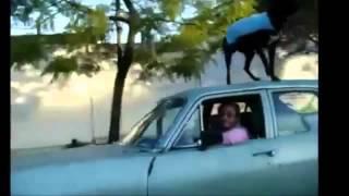 Прикол Мужик выгуливает собаку