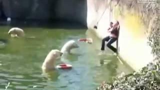 Repeat youtube video Mulher Cai na Piscina  de Ursos Polores E é Atacada