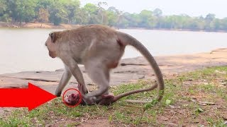 OMG! Break heart this female monkey mistreat newborn baby monkey cry nearly die/So pity poor baby