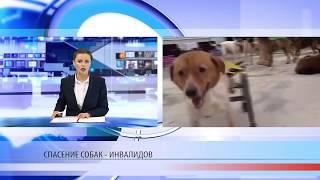 Спасение собак-инвалидов