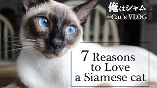 7 Reasons to Love a Siamese Cat|Life with a cat