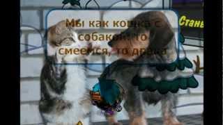 Шарарам -- Триада & Градусы - Мы как кошка с собакой