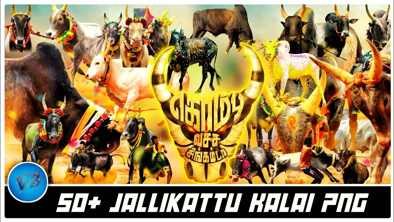 Jallikattu Png Jallikattu Kaalai Vijayabala Design Youtube Are you searching for jallikattu png images or vector? jallikattu png jallikattu kaalai vijayabala design