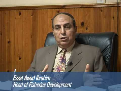 Fish farming boom in Egypt