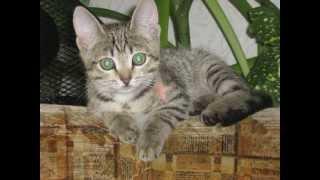 """Мой кот Тимоша. Проект """"Мои домашние питомцы"""", 1кл, """"Окружающий мир""""."""