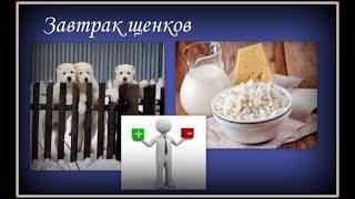 Завтрак щенков в возрасте 3-4 месяца. Питомник