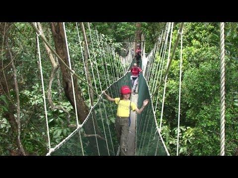 Malaysia / Borneo-Sabah - Kinabalu Park