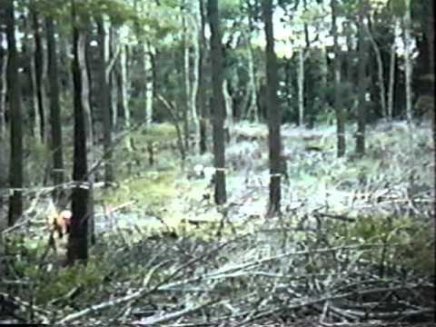 Crop Tree Management for the Landowner