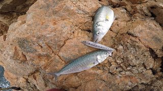 2 Fish on 1 Lure! Rock Fishing Australia
