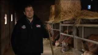 La vache parthenaise s'installe dans le créneau des races haut de gamme au salon de l'agriculture