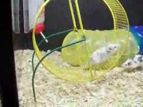 Petco Rats funny funny mic...