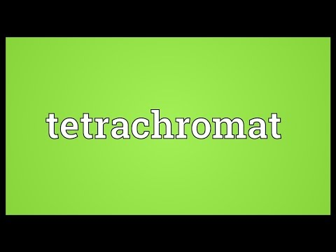 Tetrachromat Meaning