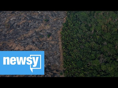 Report: Rainforest clearing booms in Brazil