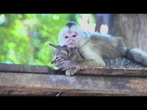 Hilarious Monkey Kisses A Cat Against His Will