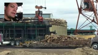 Hauling Wood on Wednesday