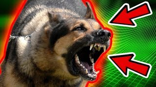 THE MOST DANGEROUS DOGS