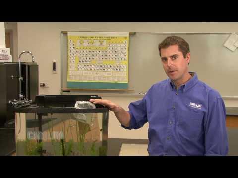 Freshwater Fish Acclimation
