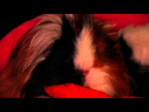 Digisaurus - Atomic Guinea Thug
