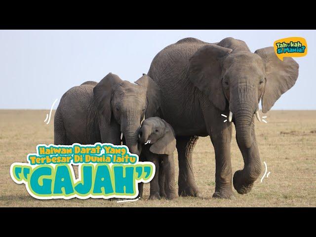 Tahukah Si Manja Eps 5 - Gajah