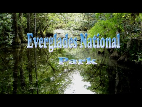 Florida Travel Destination & Attractions | Visit Everglades National Park Daytona Show