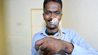 Neelakkannan Chera - Snake Master Vava Suresh