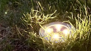 Tomshine LED Solar Lights Outdoor Flush Pathway Ground Lights review