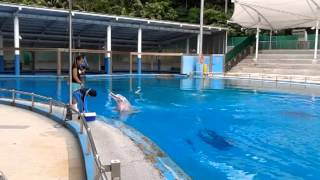 Emir as a dolphin trainer