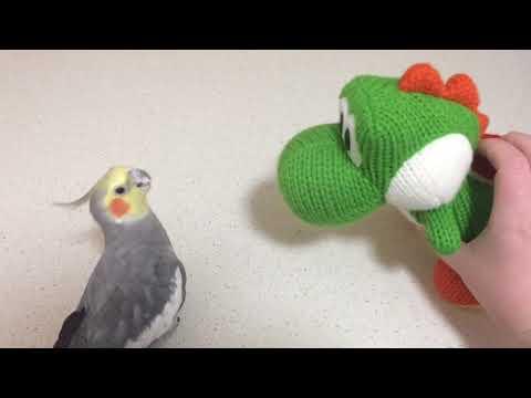 Will My Bird Talk To That? - Mega Yarn Yoshi Amiibo