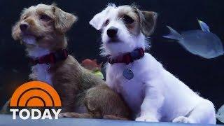 Puppies Get To Explore Closed Georgia Aquarium During Pandemic | TODAY