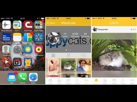 dating apps for cat lovers