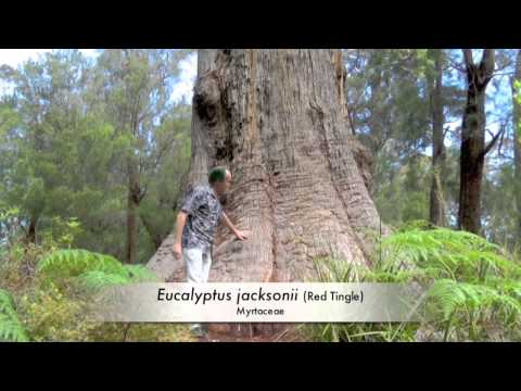 FIELD TRIP with PATRICK BLANC in  WESTERN AUSTRALIA