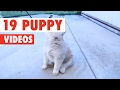 19 Puppy Videos Compilation 2017