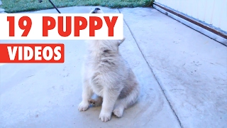 Repeat youtube video 19 Puppy Videos Compilation 2017
