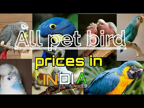 All pet bird prices in INDIA || bird prices || pet bird keemat || prices of birds in India ||