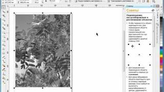 Corel Draw X5 для початківців. Настройка кольору і тону. ч. 2 (8.8)