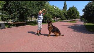 Собаки любят играть и общаться со своим хозяином.