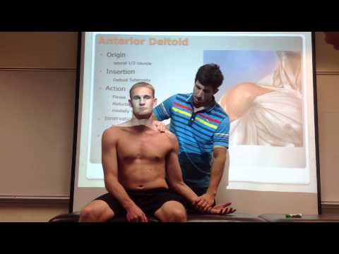 Anterior Deltoid: Palpation, Manual Therapy & Stretch