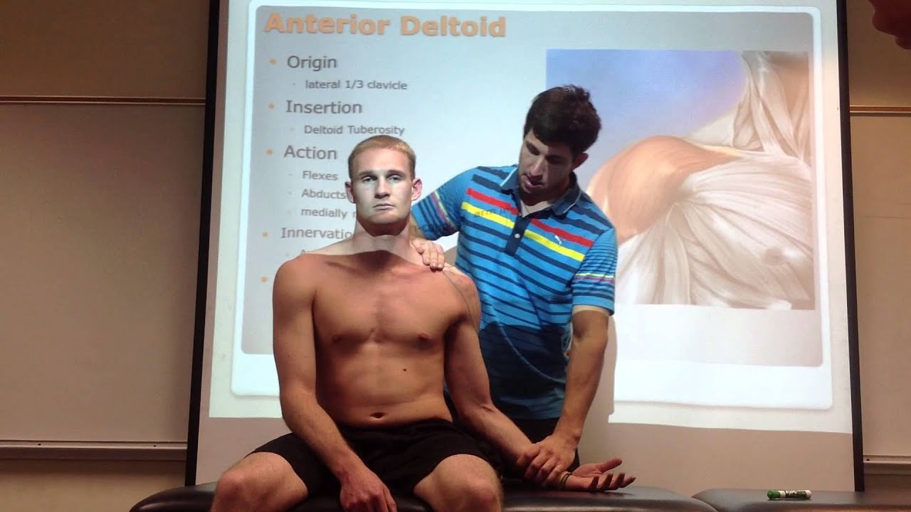Anterior Deltoid: Palpation, Manual Therapy & Stretch - YouTube