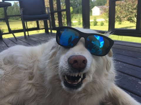SHADY RAYS SUNGLASSES REVIEW!