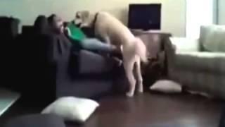 Забавные животные Собака очень хочет девушку