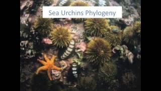 Sea Urchin Life
