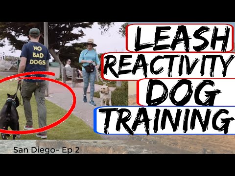 Rottweiler Attacks other dogs - Aggressive Dog Training with Americas Canine Educator Day 1 Part 2
