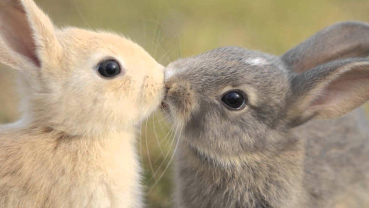 I 10 Animali Più Carini Al Mondo