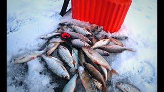 Уловистая безмотылка или совпадение?Ловля плотвы ны безмотылку! Рыбалка 2020!