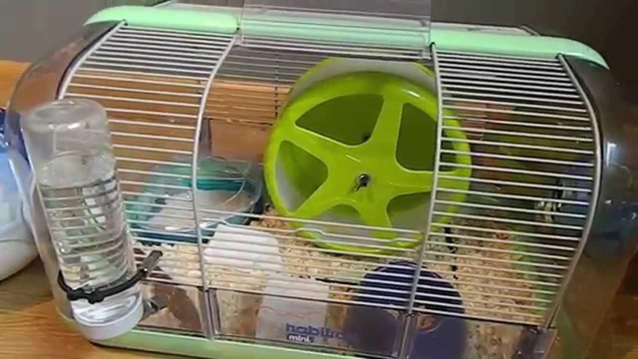 comment convaincre ses parents d 39 avoir un hamster youtube. Black Bedroom Furniture Sets. Home Design Ideas