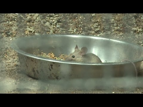 Mice at Albuquerque Zoo sign of needed improvements