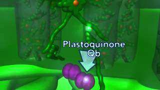 Фотосинтез (светозависимая фаза)