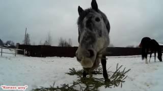 Содержание лошади//За кадром.